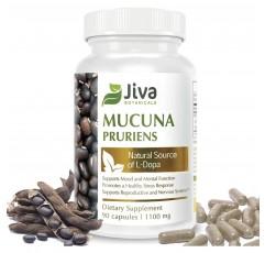 Mucuna Pruriens 캡슐 (1100 mg) – L Dopa Mucuna 고급 Mucuna Pruriens 분말 및 벨벳 콩 추출물 포뮬러 – Jiva Botanicals (90 캡슐)